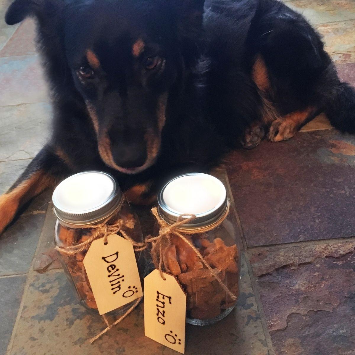 store homemade dog treats